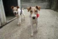 Calisto and his companion in kennels