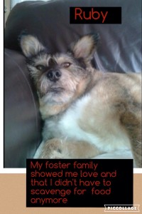 foster4