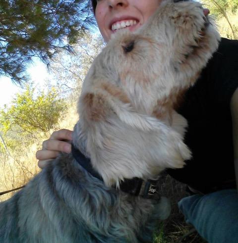 Sos Dog Rescue Spain