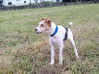 Calisto in foster in Spain
