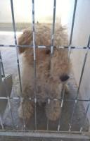 Rayo in the perrera