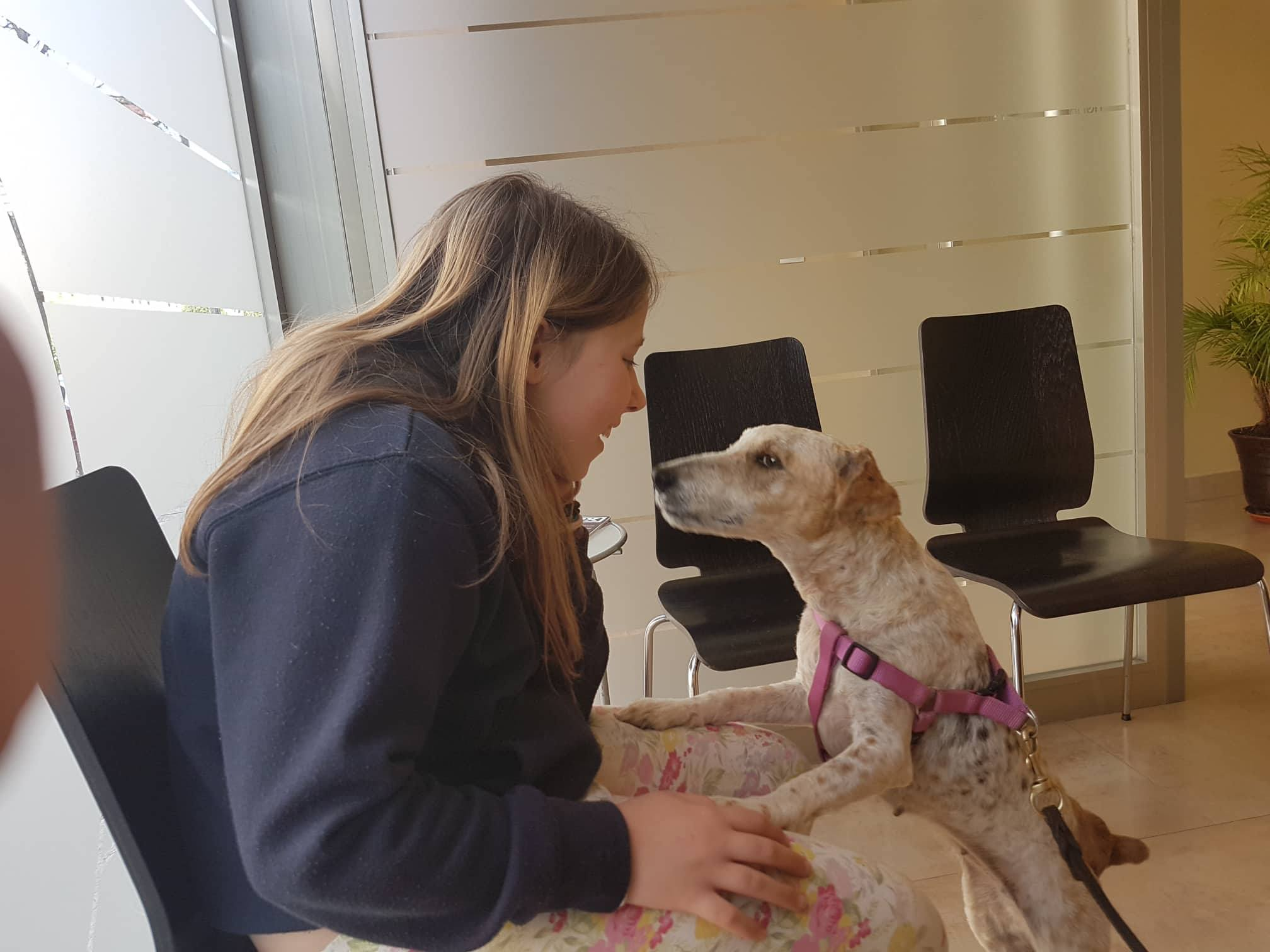 Adopting a dog with Terrier SOS: FAQs & Download Our
