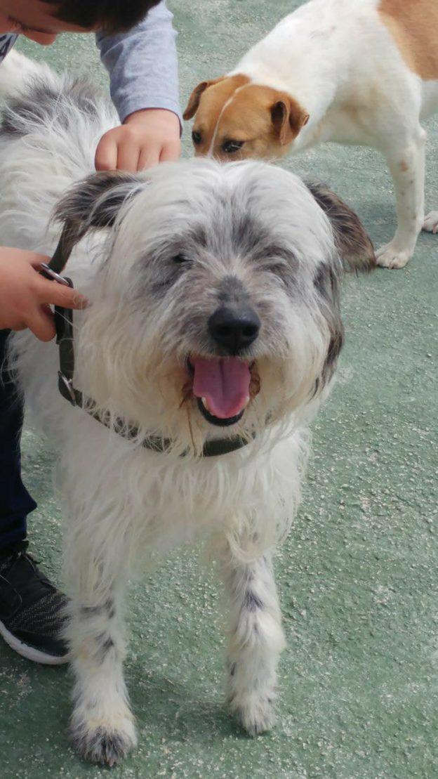 Gustavo Becquer - Terrier Cross - Rehomed - Terrier SOS - a UK-based