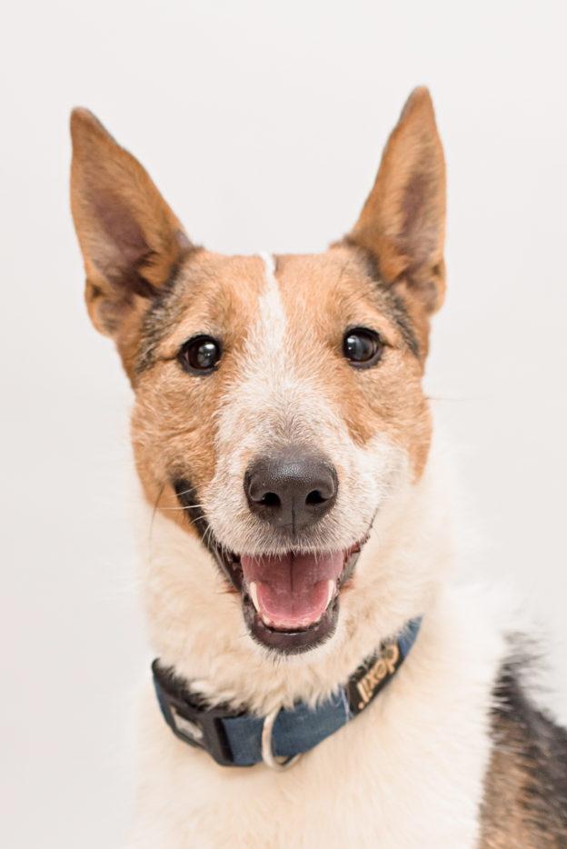 Kika - Collie Terrier Cross - Terrier SOS - a UK-based dog rescue